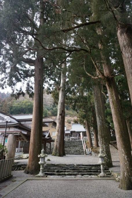 焼山寺 境内 杉