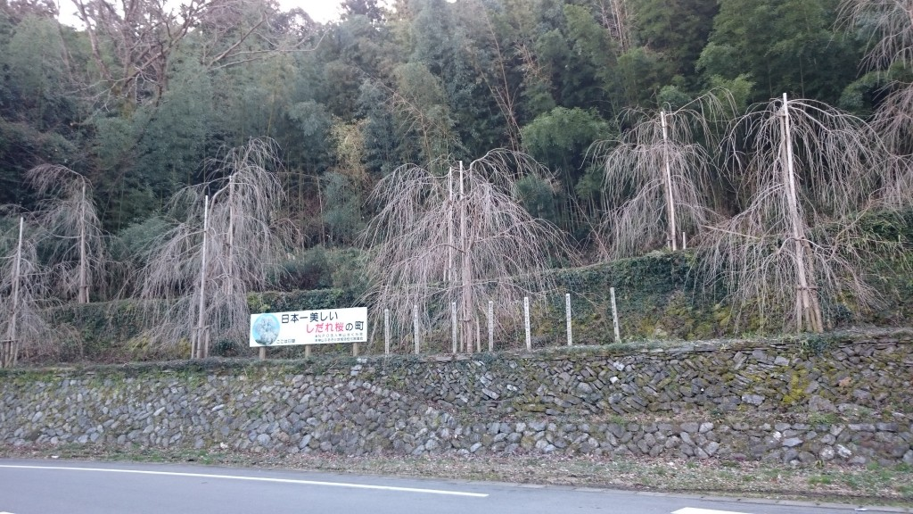 臼嶽 日本一美しいしだれ桜