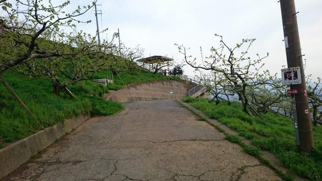 町石道 柿畑 展望台