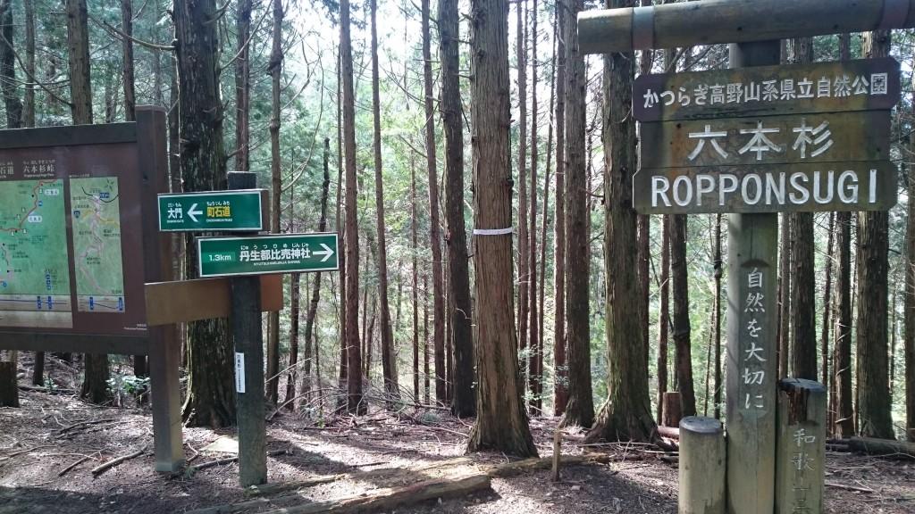 町石道 六本杉