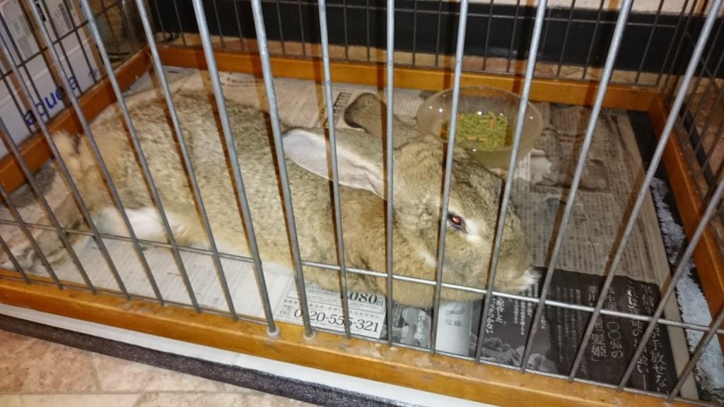 国民宿舎土佐 ジャイアントウサギ
