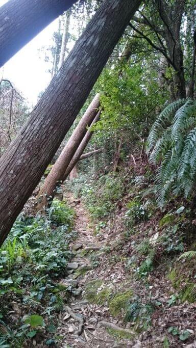 あしずり遍路道 倒木