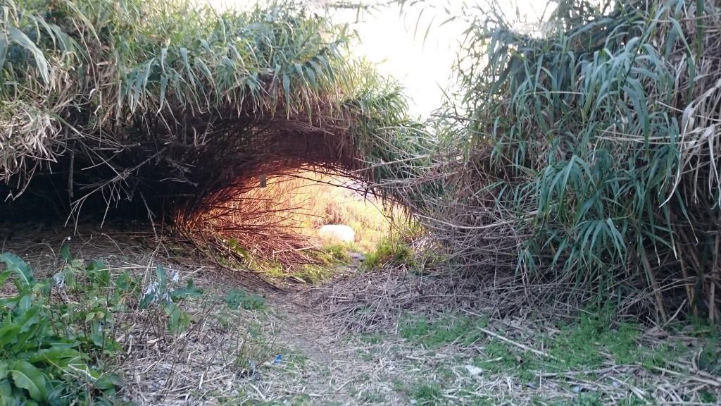 大月へんろみち 赤泊の浜 草トンネル