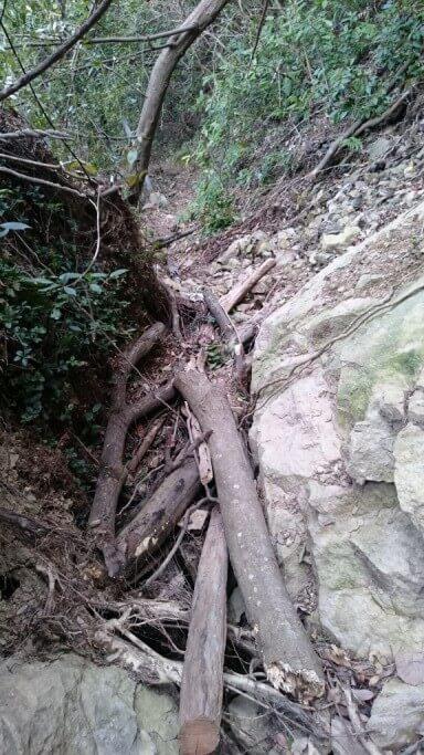 松尾峠へんろみち 下り 未舗装路 倒木