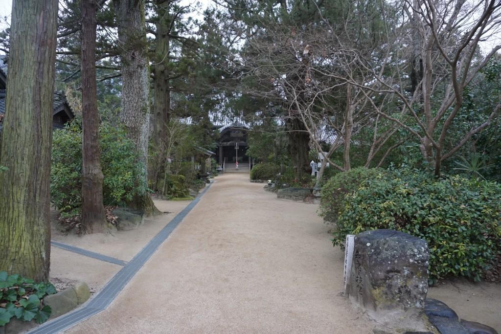 浄瑠璃寺 参道 常緑樹 イブキビャクシン