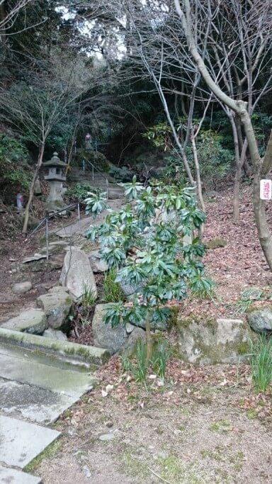 仙遊寺 参道 石段