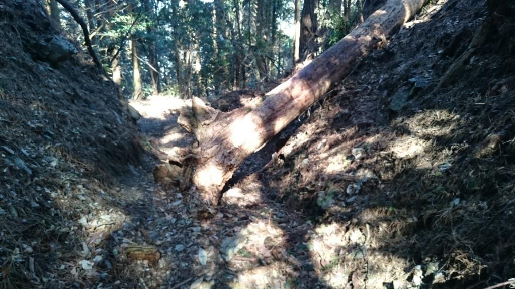 横峰寺 下り遍路道 倒木