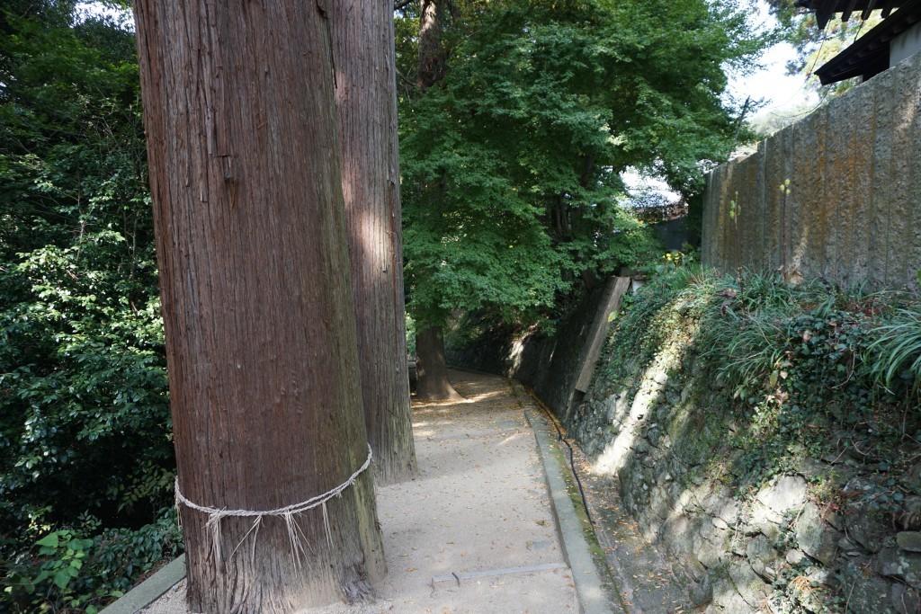 白峯寺 崇徳天皇陵墓への道 杉神木