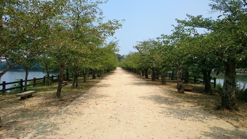 亀鶴公園 宮池 堤