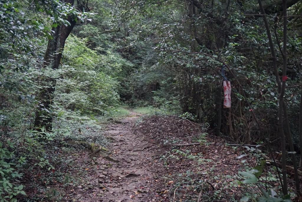 天霧城への遍路道 木々
