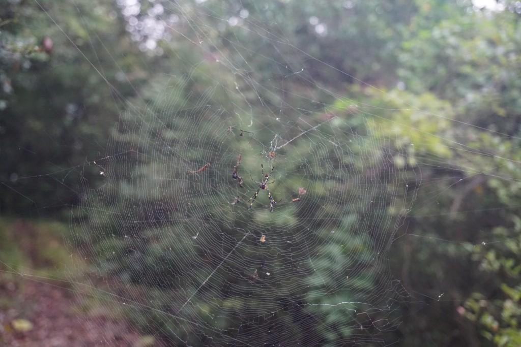 天霧城 クモの巣
