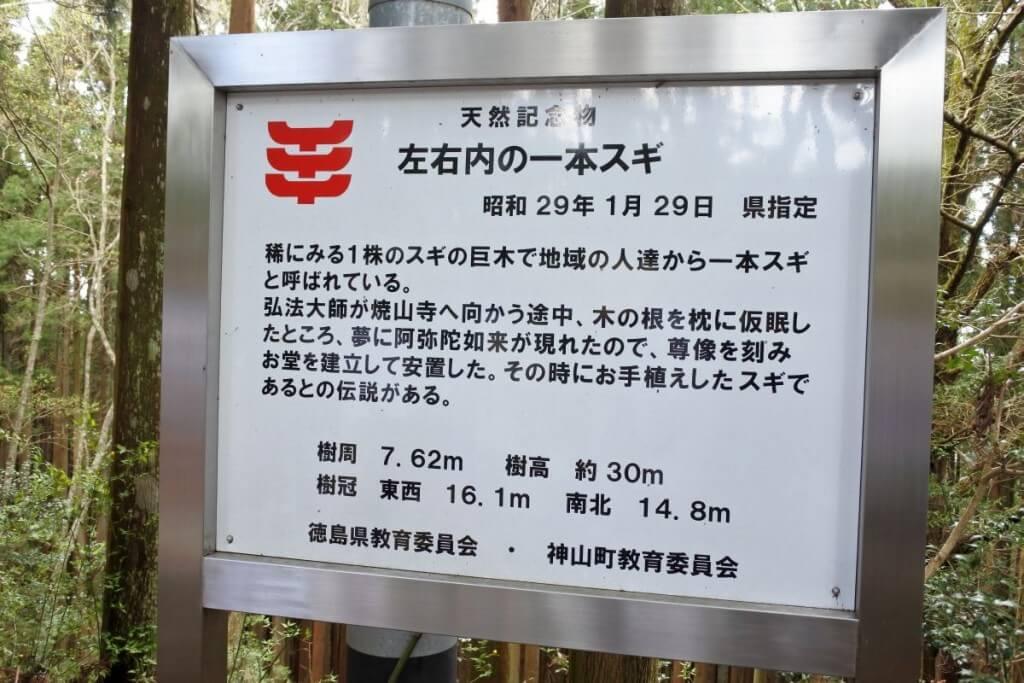 神山町 左右内の一本杉解説