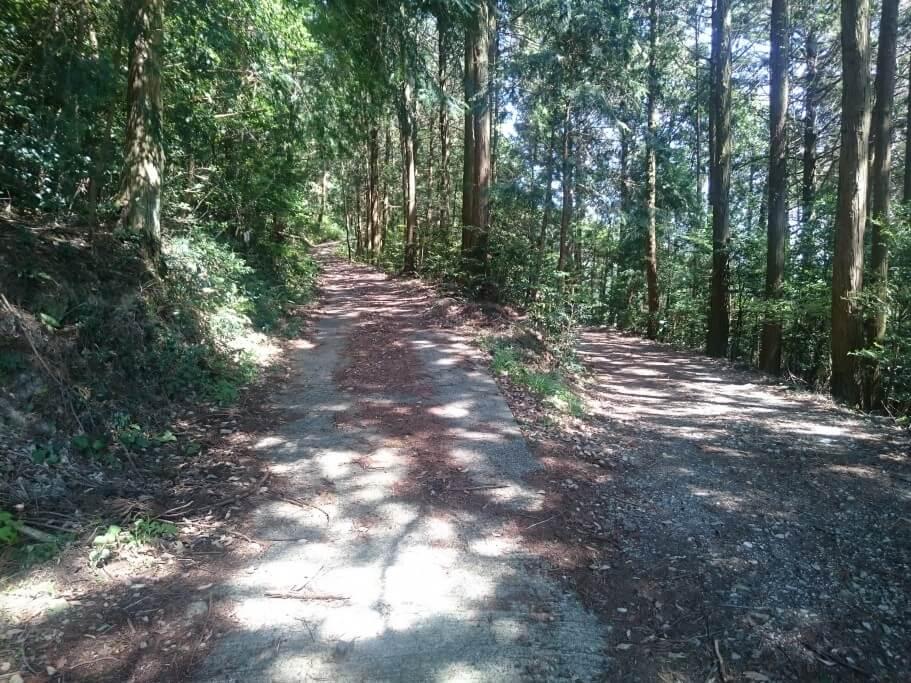 大瀧寺遍路道 林道