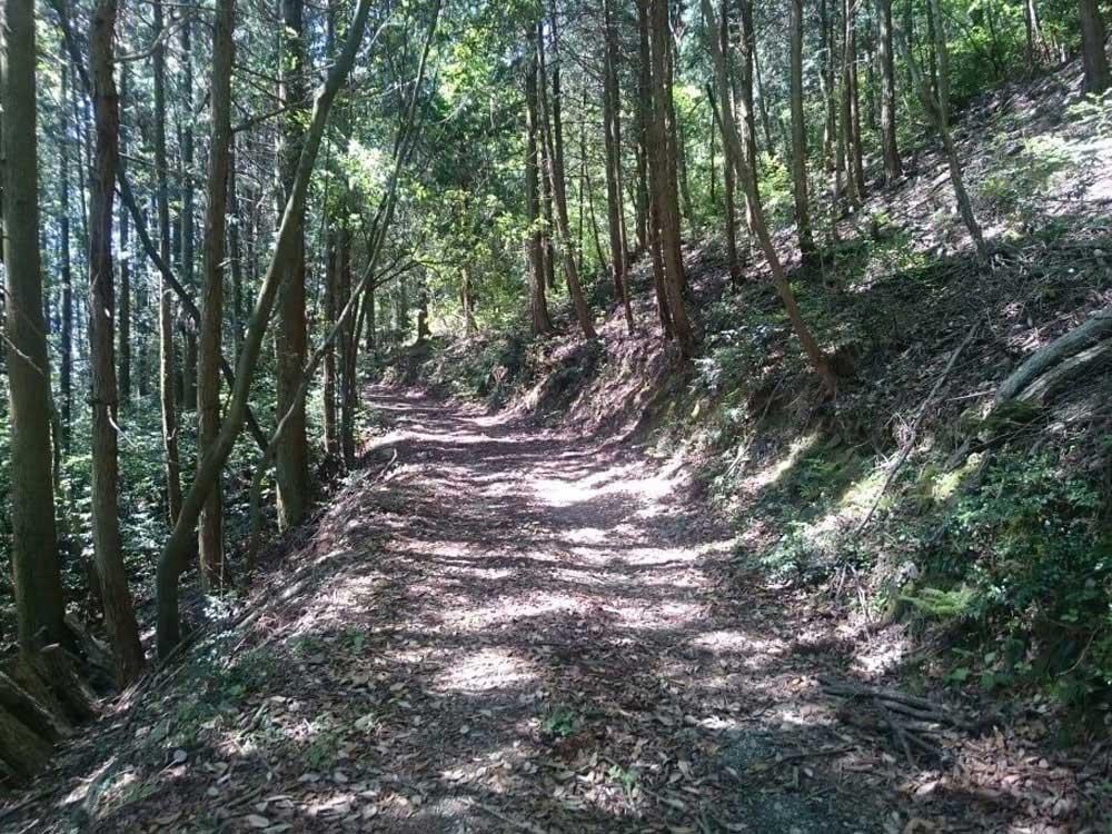 大瀧寺遍路道 未舗装林道