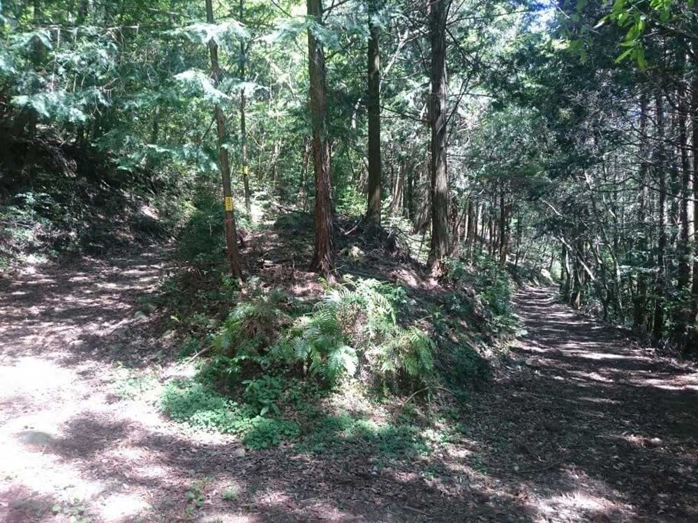 大瀧寺遍路道 未舗装林道 分岐点