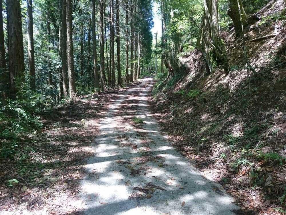 大瀧寺遍路道 林道再び
