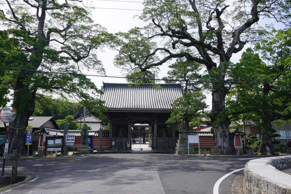 與田寺門前の巨木