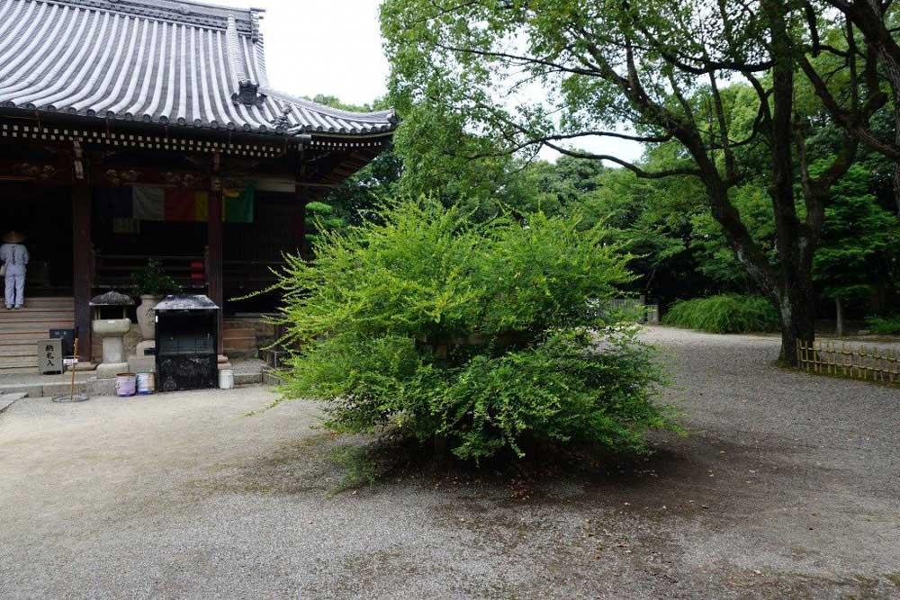 萩原寺 本堂前 萩