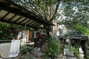 椿堂 椿の大木 おさわり大師