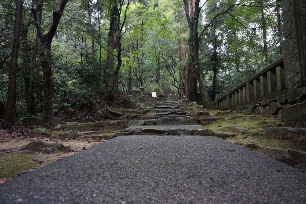 西山興隆寺 楓の参道