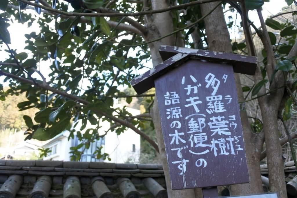 多羅葉樹の木 看板