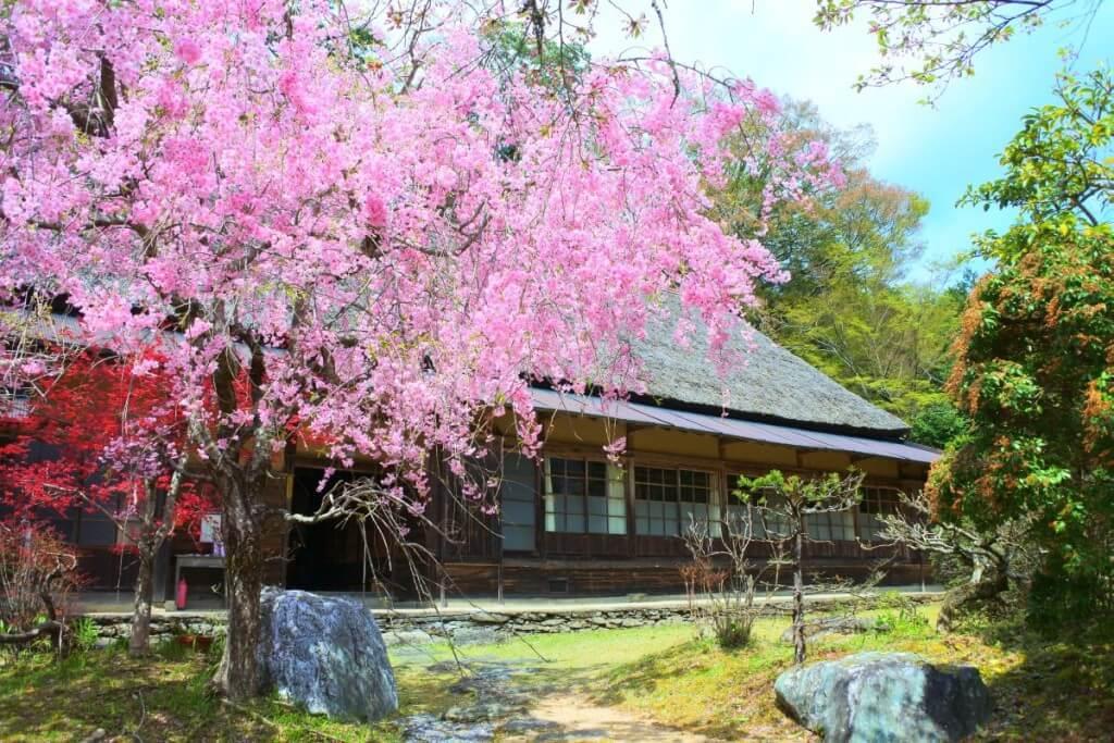 三木家住宅 桜