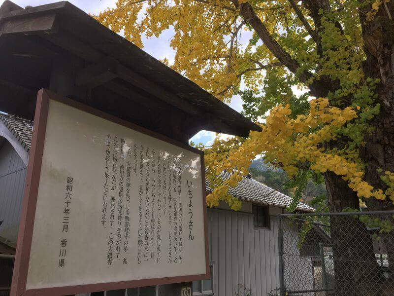 阿讃県境 大銀杏 香川県解説