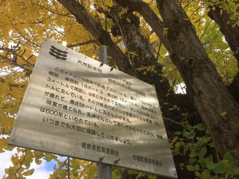 阿讃県境 大銀杏 徳島県看板