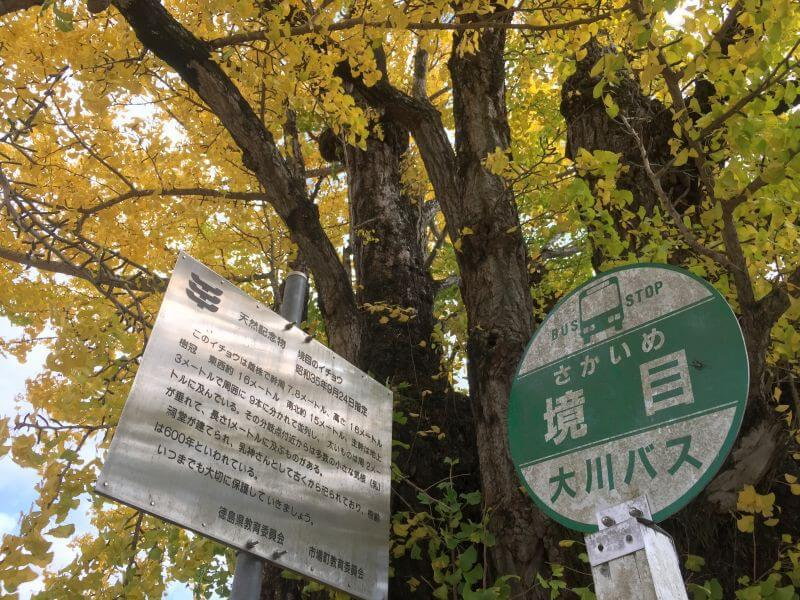 阿讃県境 境目バス停