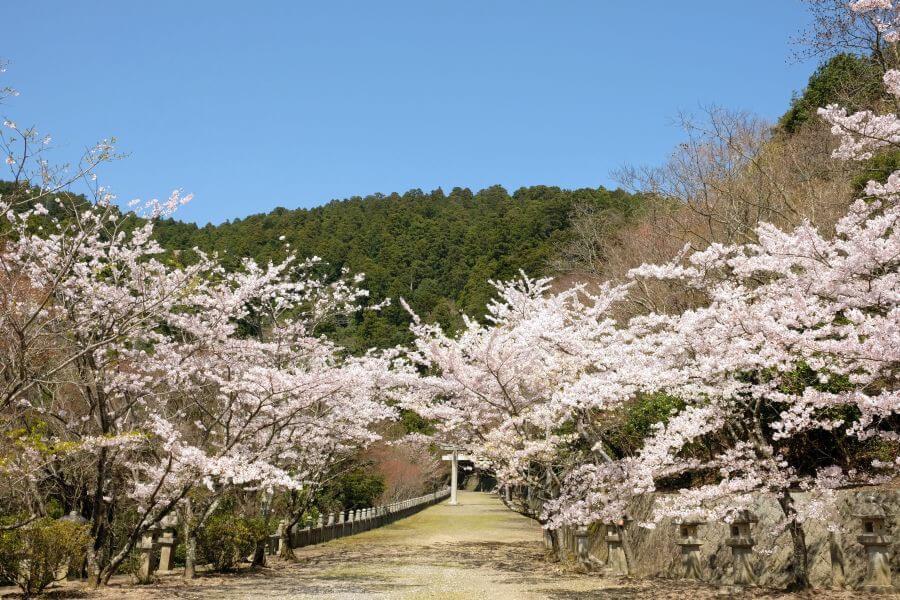 箸蔵寺 参道 桜