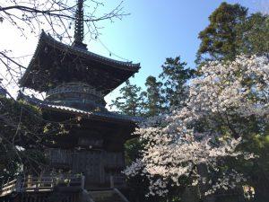 霊山寺 多宝塔 桜