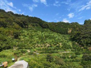 自転車遍路 清瀧寺手前の柑橘畑