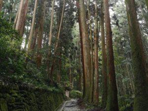 ミニベロ遍路 大寶寺参道