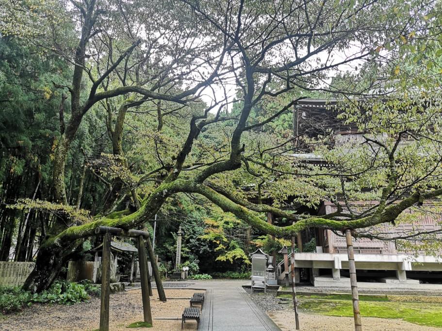 ミニベロ遍路 三角寺の桜