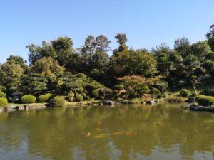 郷照寺 日本庭園