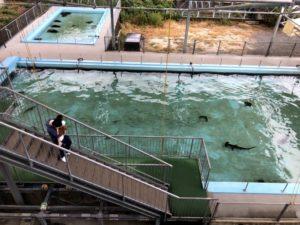 むろと廃校水族館 プール水槽