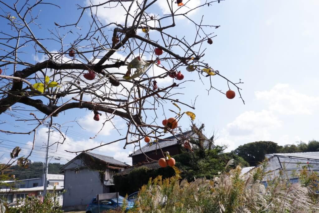 おうち宿しだお 庭の柿