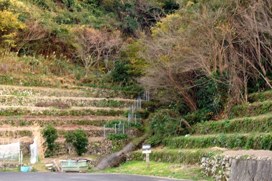 段畑 県道357号沿い 龍ヶ迫