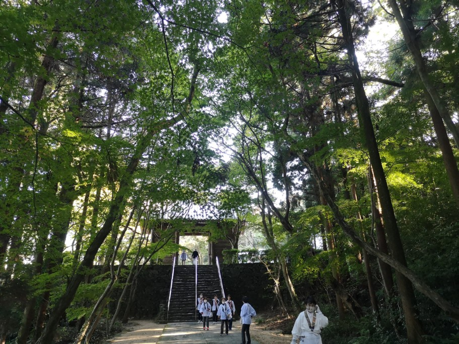 根香寺の緑
